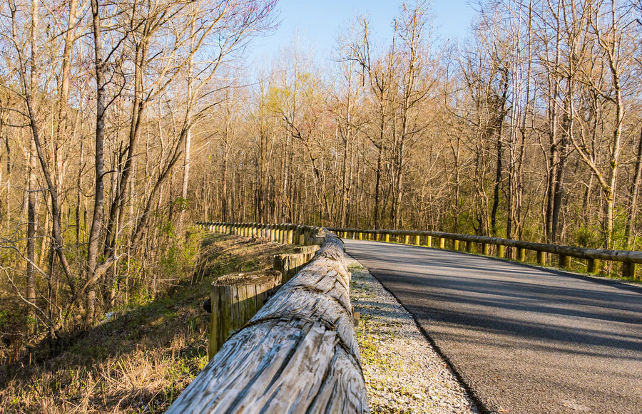 Asphalt Beauty In Nature Bridge - Man Made Structure Curved Road Day Growth Highway Highway Photography Highway Railing Log Rail Nature No People Outdoors Road Sky The Way Forward Tree Trees Trees And Nature Trees And Shadows Trees And Sky Winding Road