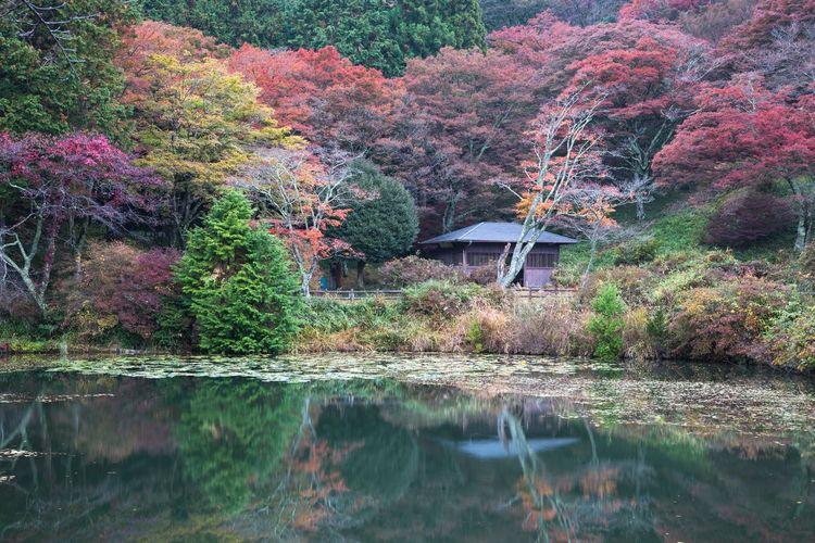 鳥見山公園の紅葉 Nara Japan Autumn Fall Season Autumn colors Tree Water Lake Reflection Waterfront Refection Countryside Lakeside