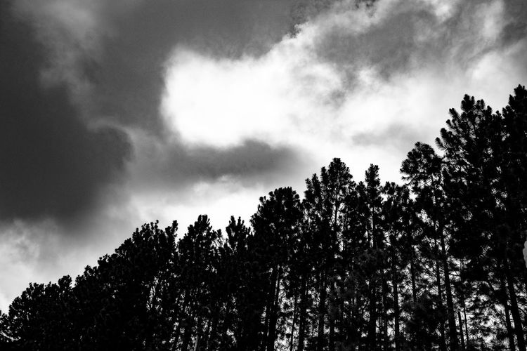 Mood Atmospheric Mood Beauty In Nature Branch Cloud Cloud - Sky Day Green Growth High Section Low Angle View Lush Foliage Majestic Nature Non-urban Scene Outdoors Outline Scenics Silhouette Sky Tall - High Tranquil Scene Tranquility Tree Tree Top Treetop