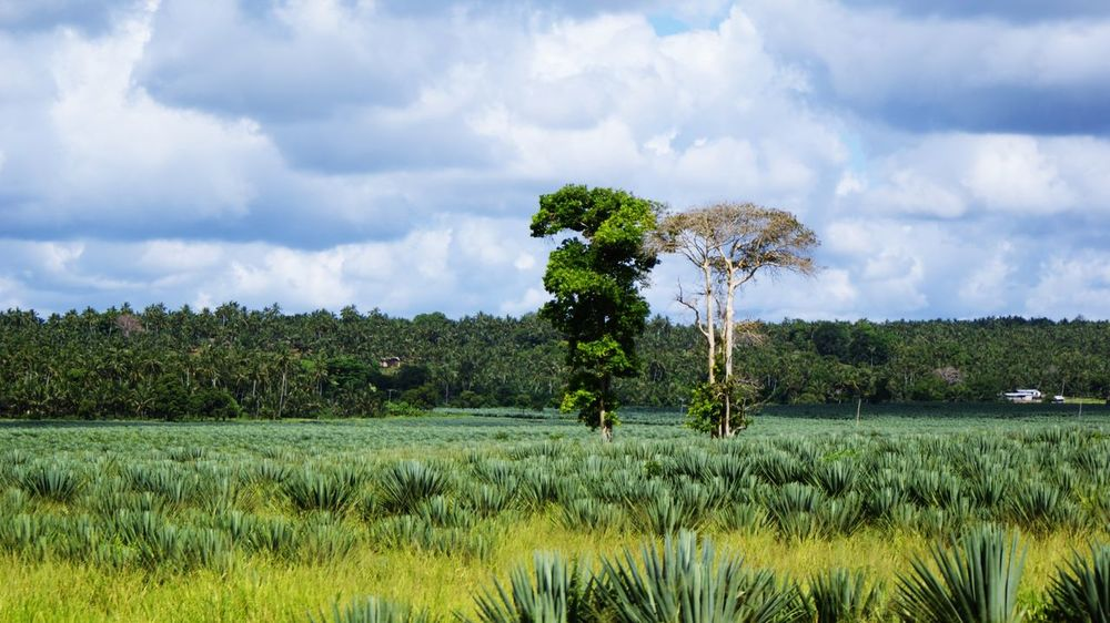 Africa Kenya Tsavo Est Nature Tree Sky Cloud On Moves Bare Tree Plant Environment Land Landscape Cloud - Sky Beauty In Nature Field Scenics - Nature Tranquility No People Rural Scene Tranquil Scene Agriculture Day Outdoors