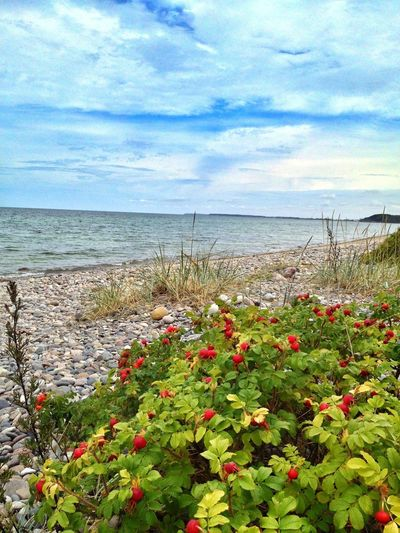 Landscape_Collection EyeEm Nature Lover Baltic Sea On The Beach