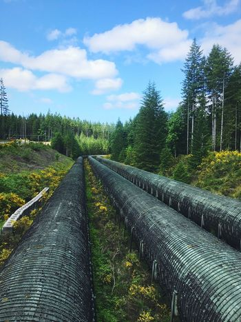 British Columbia BC, Canada Vancouver Island Canada Island Life Endless Pipes Cloud - Sky Tree Sky No People Day Nature The Way Forward Outdoors Scenics