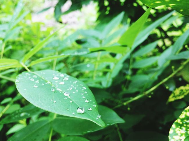 Wet Drop Rain Leaf Nature Water Plant Green Color Dew Close-up Freshness RainDrop Growth Outdoors No People Beauty In Nature Fragility Day Rainy Season Flower Head