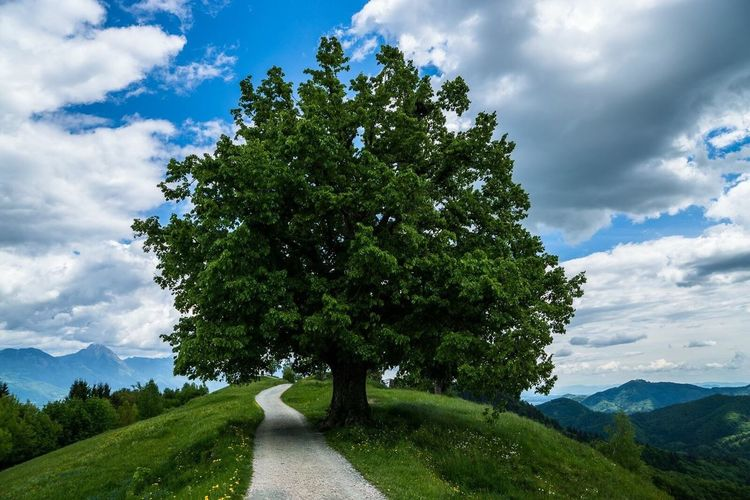 Slovenia Tree Nature No People Green Peaceful Mountain