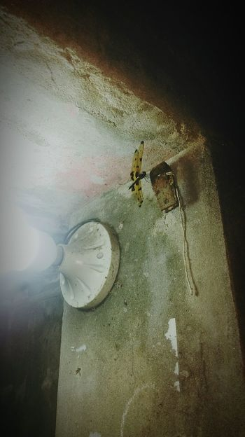 #Dragonfly #Bangladesh #insects #yellow #black  #lights