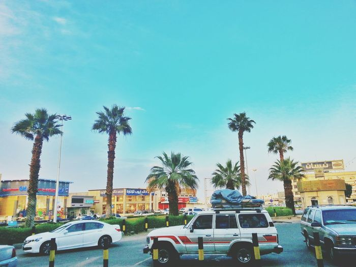Palm trees and clear skies Saudi Arabia Scenery