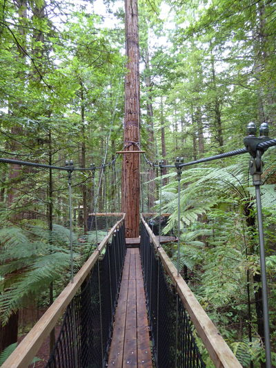 Junction in the trees Beauty In Nature Bridge - Man Made Structure Day Forest Nature No People Outdoors Railing Rope Bridge Suspension Bridge Travel Destinations Tree Wood - Material
