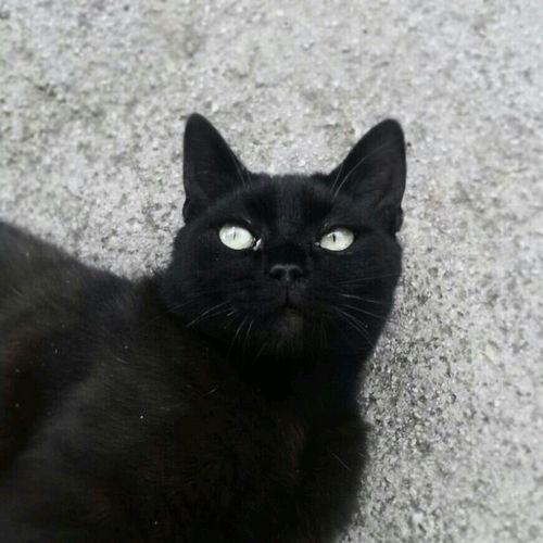 My Cat Ricky❤