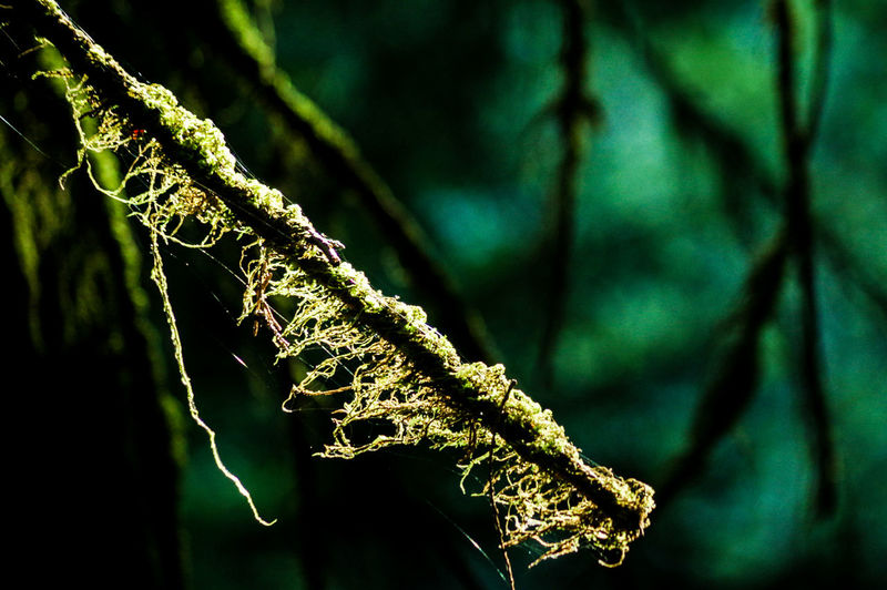 Hang Mt. Fromme Nature Beauty In Nature Green Color Growth Leaf Close-up No People Drop Plant Outdoors Water Day Freshness Lowkeyphotography Eyemphotography Straightfromcamera Low Angle View Leisure Activity Pentax Nature Tranquil Scene Tranquility Beauty In Nature Scenics