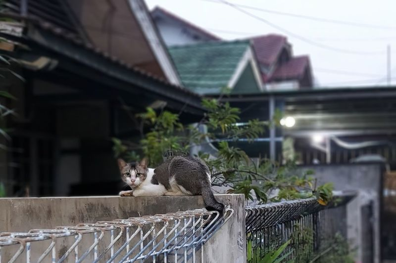 Cat sitting on a railing of a house