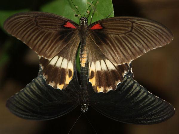 Butterfly ❤ EyeEm Animal Lover Eyeem Insects Mating Pair Of Butterfly EyeEm Masterclass