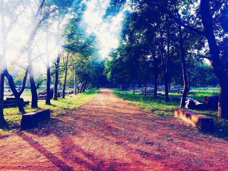 A beautiful road to travel. Countryside Country Road Country Drive Country Life Countryside Life Forest Forest Path Forest Photography Forest Road Forest Trees JungleExperience Jungleroad