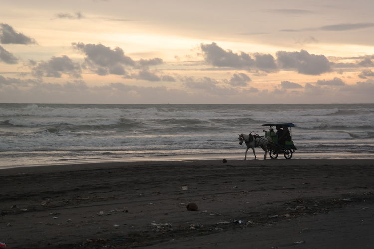 Delman on the beach EyeEmNewHere Transportation Sunsets Beach Beauty In Nature Sunset_collection