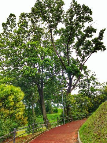 EyeEm Gallery Tree Branch Sky Green Color Grass Plant