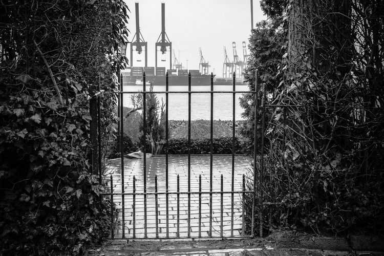 hanseatic gardening Black And White Black And White Collection  Construction From My Point Of View Gate Growth Hafen Hamburg Hamburg Harbour Harbour Industrial Landscapes Light And Shadow Nautical Nautical Vessel Open Edit Outdoor Photography Outdoors Pforte Reflection Schwarz & Weiß Schwarzweiß Shrub Tor Trees Urban Nature