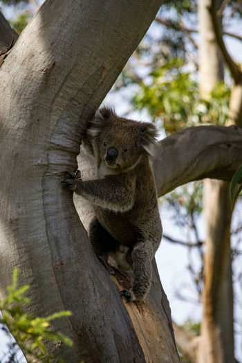 Cat sitting on tree trunk
