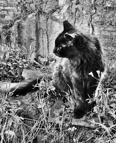 Blackandwhite Cat Cats Of Rome Animals Posing