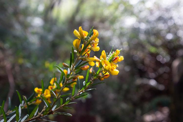 Native plant in