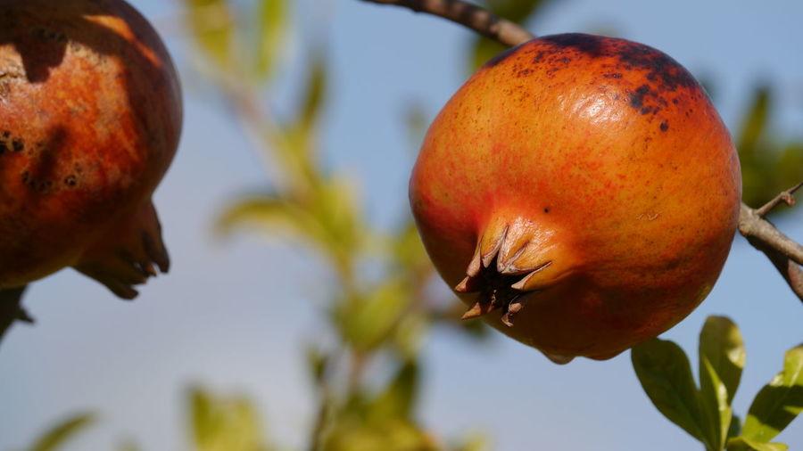 ripe fruits,