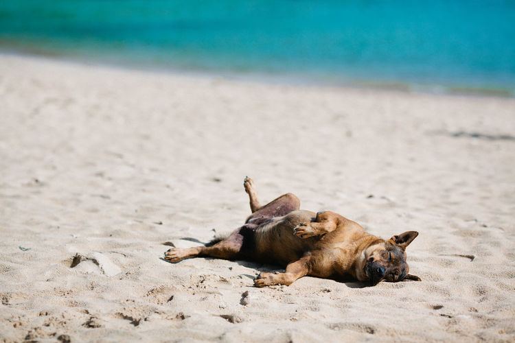 Animal Themes Beach Day Lying Down Mammal Nature No People Outdoors Relaxation Sand Sea Summer