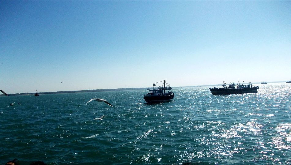 Shimmering Waters Teal Ocean Clear Sky Tranquility Soft Waves Nautical Vessel Seagulls Flying Lost In The Beauty Of Glistening Ocean Bet Dwarka Travel Dairies !