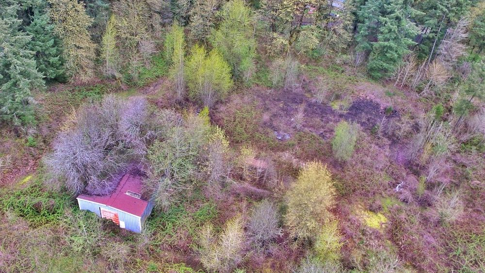 Darryn Doyle Check This Out Eye4photography  Dronephotography Drone  Tree_collection  Forest Photography Backgrounds Full Frame Tree Close-up Growing Plant Life Textured  Rugged Rough