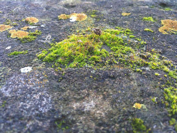 Moss Moss &
