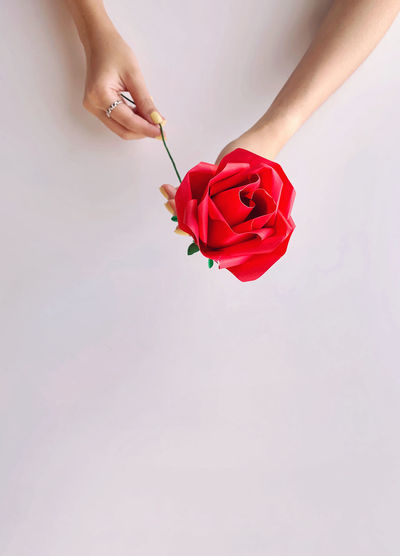 Midsection of woman holding red rose against white background