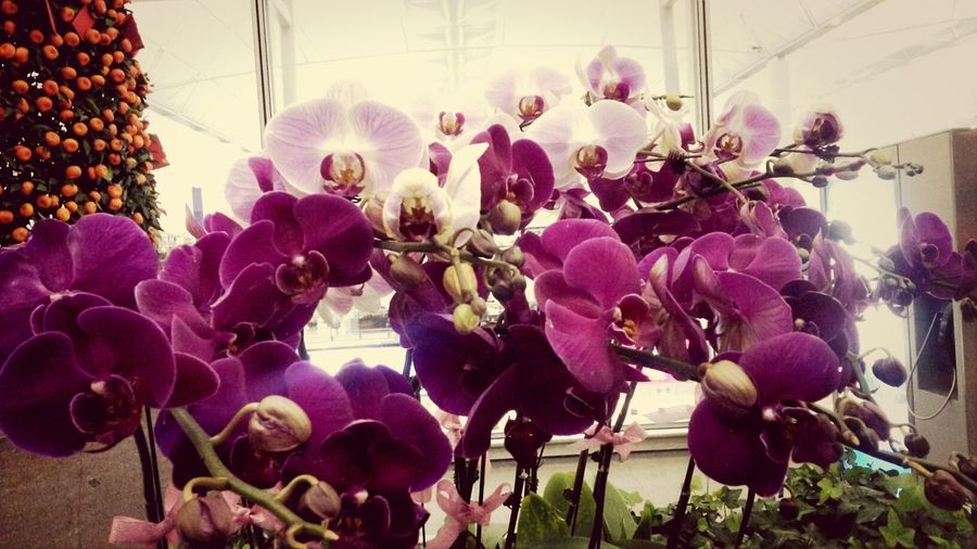 they always have this lovely flowers as we stepdown on our way to departure area terminal 2 HONGKONG ♥