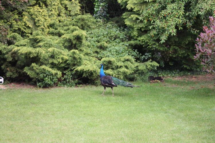 Bird Colourful