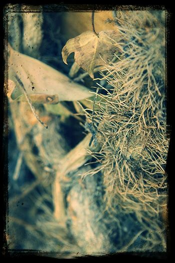 Pattern, Texture, Shape And Form I Love Nature! Eye4enchanting