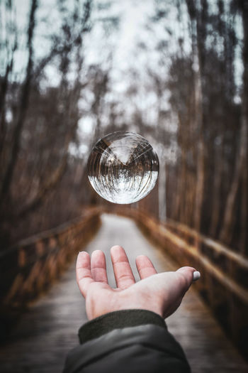 Human Hand Tree Holding Human Finger Close-up Sky Crystal Ball Paranormal Crystal Sphere Crystal Glassware Fingerprint Personal Perspective Woods Fortune Telling Forest The Art Of Street Photography