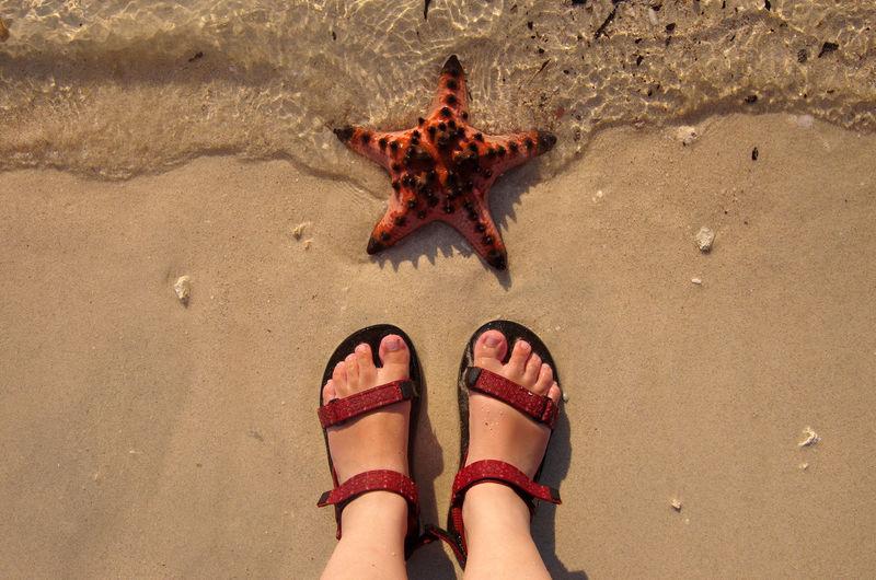 Female feet on the beach and a starfish