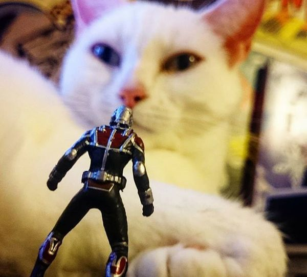 After a close shave with the washing machine and a 4ft serpent antman decides to go Big game hunting! JANTMANuary day 12 Toyptoyphotography Toydiscovery Toyunion Toycrewbuddies Toycommunity Toycollectorsunited Epictoyart Toward Toygroup_alliance Antman Marveltoys