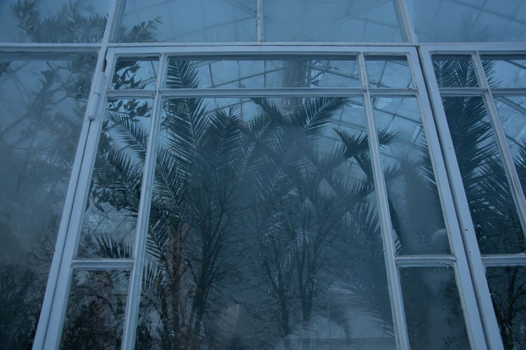 Greenhouses in winter II Glass - Material Natural Frame Plant Window Greenhouse Reflection Glass Steam Silhouette Fog Palm Tree Winter Cold Temperature Blue Hour Travel Photography Traveling Bucharest Glasshouse Palm Leaf Plant Life Transparent