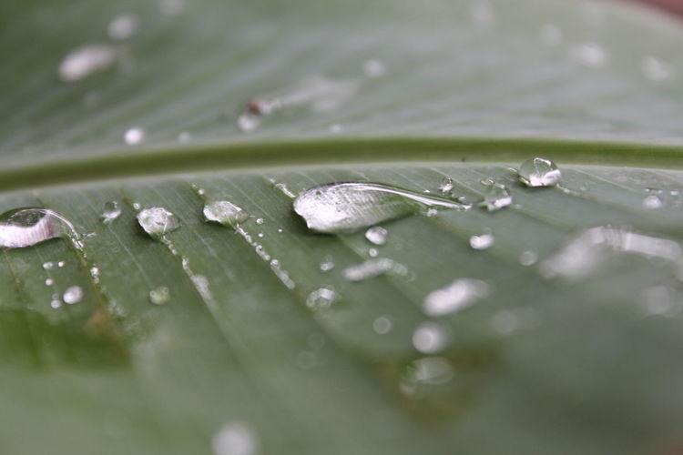 Hujan telah datang Raindrops Water Leaf Macro Nature EyeEm Nature Lover EyeEm Best Shots Maximum Closeness