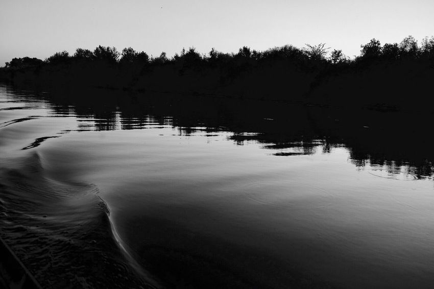 Traces Danube River Sunset Blackandwhite Water Trees EyeEmNewHere