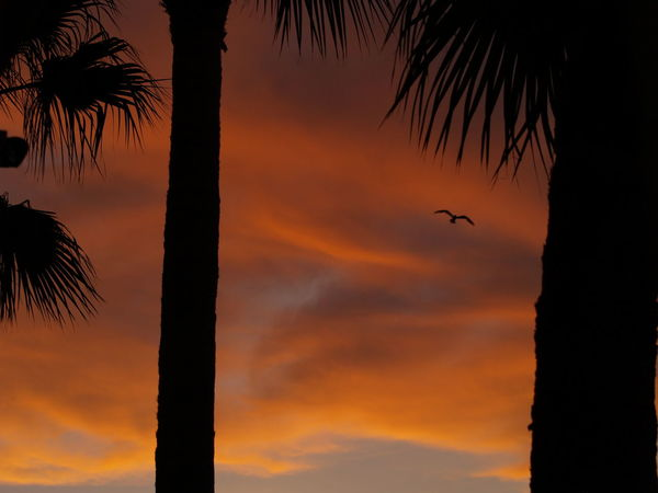 Dante's Paradise, by Chris Davis Atmospheric Mood Blood Sky Cloud Cloud - Sky Dramatic Sky Dusk Fire In The Sky Moody Sky Orange Color Outdoors Palm Tree Silhouette Sky Sky And Clouds Sun Sunset Tranquil Scene Tropical Climate