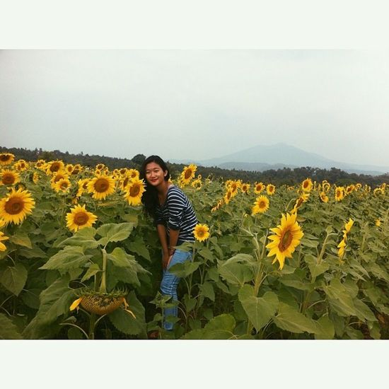 sunflower paradise. ?? Sunflower Farm Chiangkham Phayao goodday