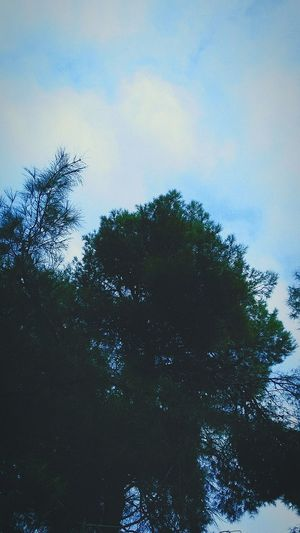 Ifeeltheair Nature Beauty In Nature Cloud - Sky Tree Sky Reflection