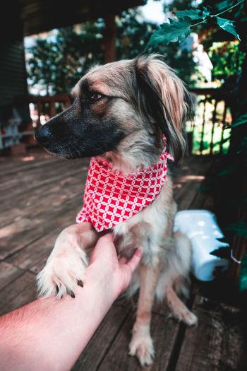 Cropped image of hand touching dog
