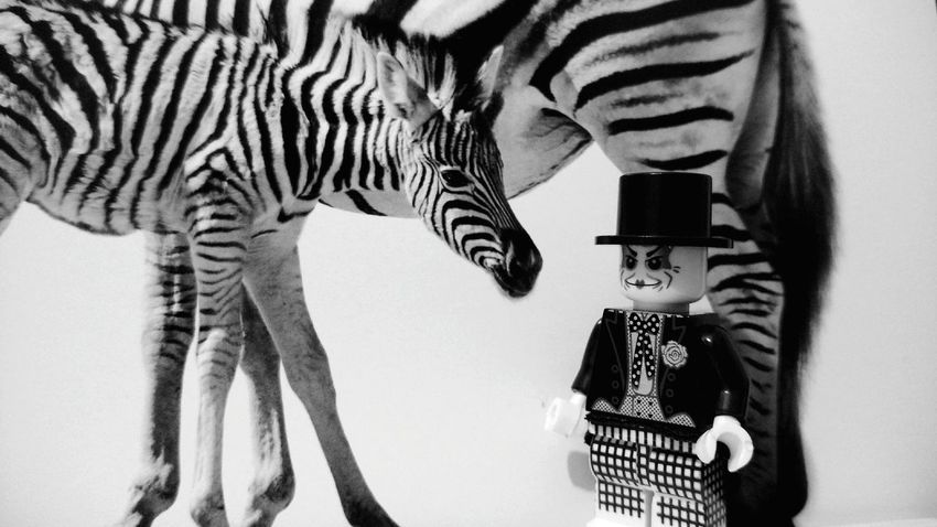 Zebra Close-up Bw_collection Clown Joker Animal B&w Photography LEGO EyeEmNewHere One Animal Animal Themes Closeup Figure Toy Legophotography Welcome Weekly Lieblingsteil Rethink Things