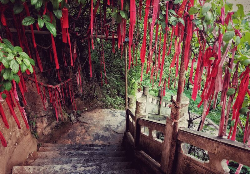 Day Outdoors No People Nature Guizhou China Tree Songtao Stairs Ribon Red