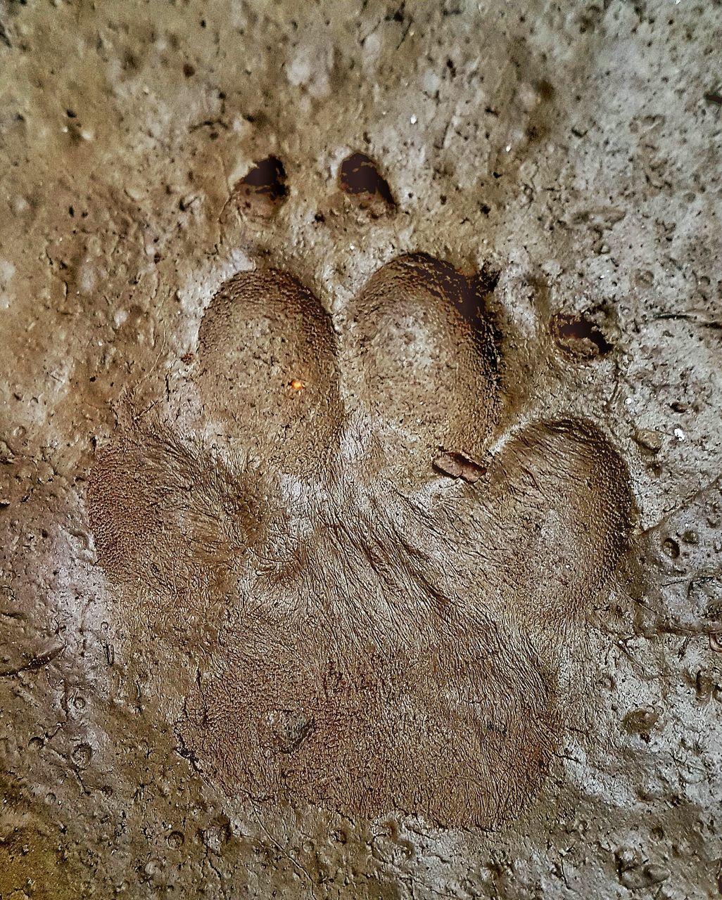 footprint, sand, paw print, no people, day, nature, outdoors, track - imprint, beach, close-up, bird, animal themes