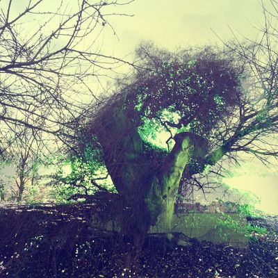 TreeExit Double Exposure Abstract TreePorn Mystic