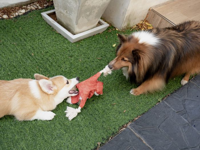 High angle view of dog eating cat