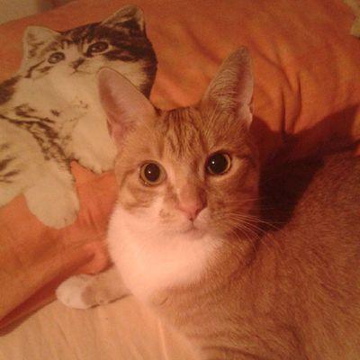 ♥ Cute Pets Ilovemycat Cat