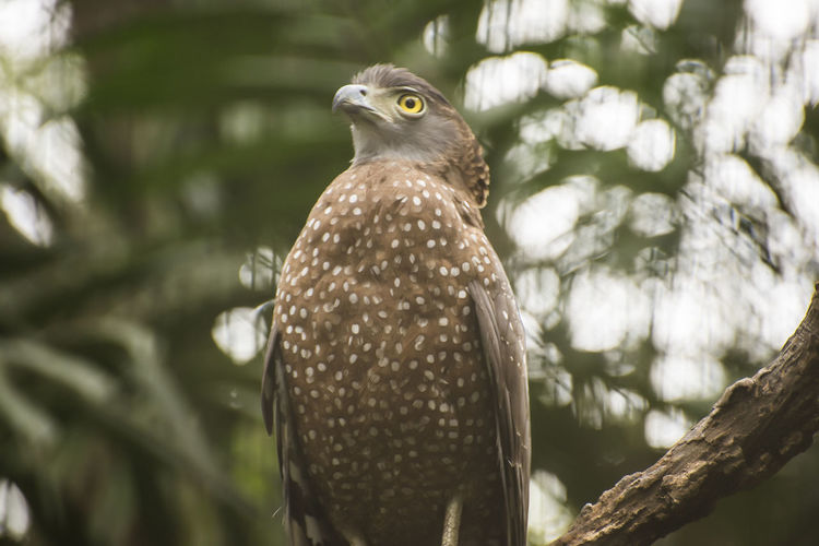 Close-Up Of Serpent Eagle Perching On Tree
