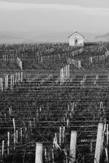 Bourgogne In A Row Lines Plant Vines Winter Agriculture Architecture Building Exterior Built Structure Burgundy Day Field Landscape Nature No People Outdoors Scenics Sky Tranquil Scene Tranquility Vineyard Wood - Material