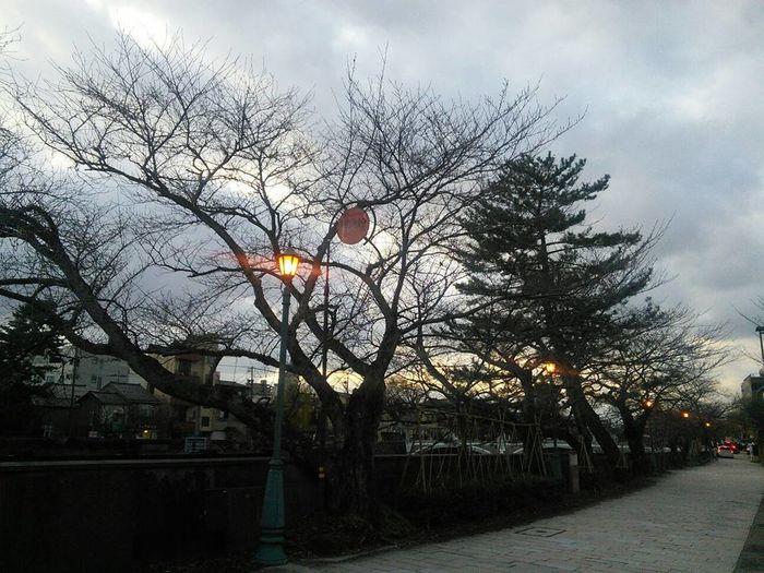 金沢を歩き尽くして最も金沢らしさを感じると思える浅野川沿い 金沢市を歩くシリーズ Winterscapes Kanazawa City,Japan Asano River Riverside Today's Weather Report 夕方 Evening Sky Lighting Tree Sky Cloud - Sky Outdoors No People Day Bare Tree Nature